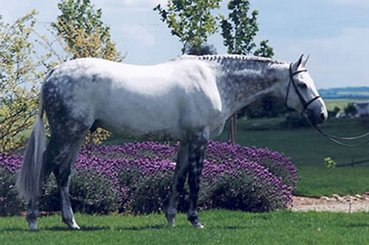 StarQuarry Farm Sire - Sir Caletto